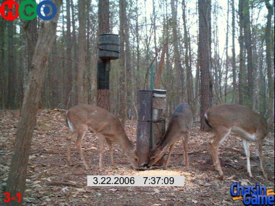 Deer at a feeder